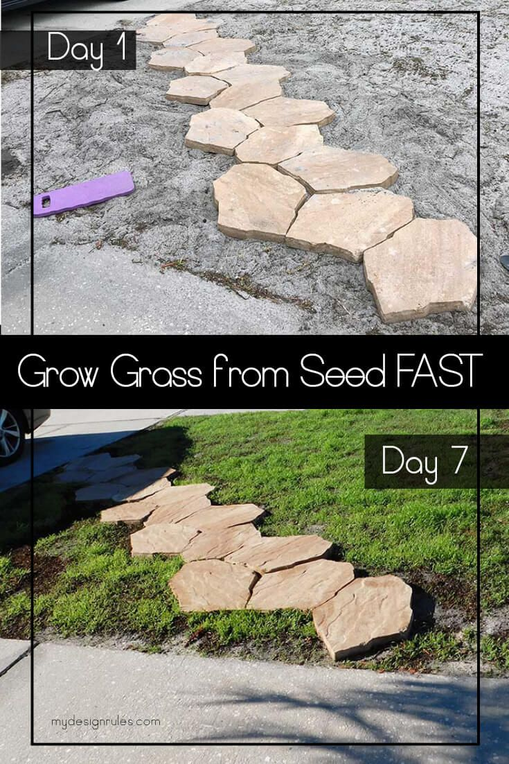 Do You Have A Lawn Full Of Weeds This Can Help Growing Grass Planting Grass Planting Grass Seed