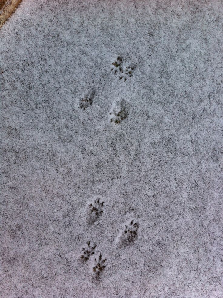 Deer Tracks, The - Aurora