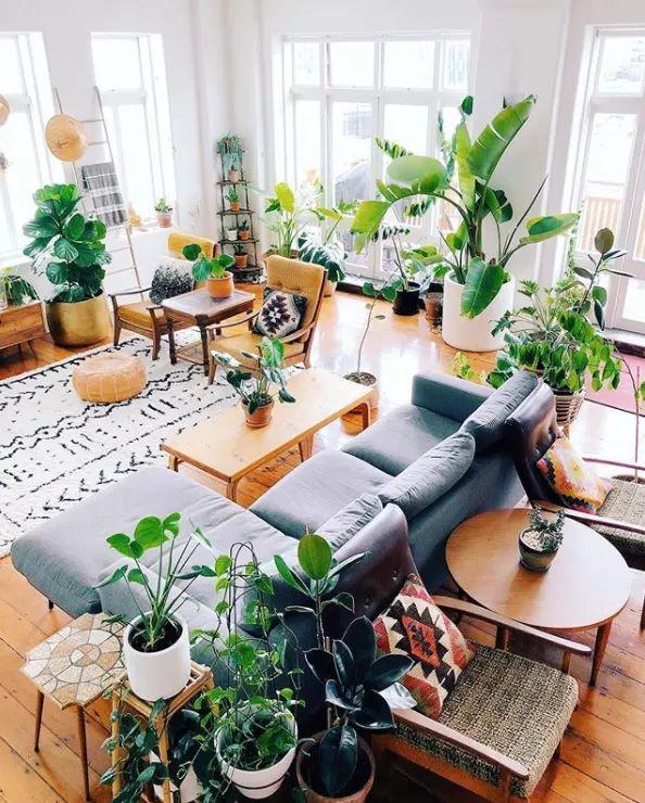 Ein Ratgeber Fur Alle Trendigen Hauspflanzen Sie Sehen Alles Uber Instagram Wohnzimmer Pflanzen Wohnzimmer Dekor Skandinavische Wohnraume