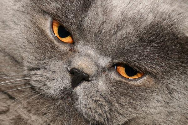Il gatto è grasso? Ecco le cause possibili