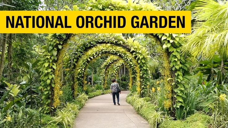 Orchid Paradise National Orchid Garden in Singapore in