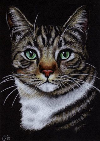 Tabby 67 CAT grey ginger orange tiger kitty kitten drawing painting Sandrine Curtiss Art Limited Edition PRINT ACEO. $6.00, via Etsy.