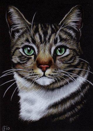 cat acting skittish