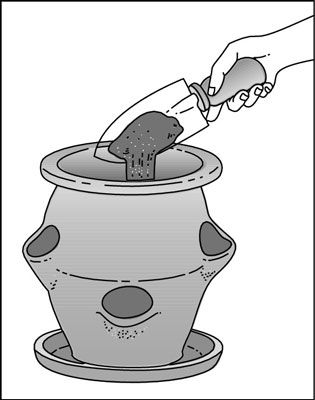 How to Plant a Strawberry Pot - For Dummies