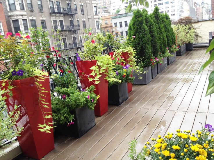 117 best images about irrigation for balcony terrace for Terrace garden plants