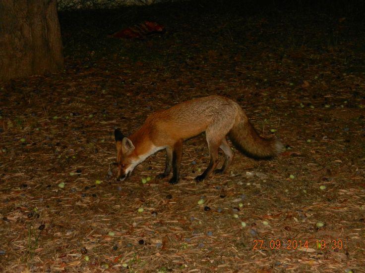 Apartments' mascot, Saly the fox! :)
