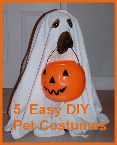 5 Easy DIY Pet Costumes You Could Create In Your Sleep ... Need a cute pet costume before Halloween, but don't have much time left? Keep reading for adorable DIY pet costumes! ... #pets #animals ... PetsLady.com