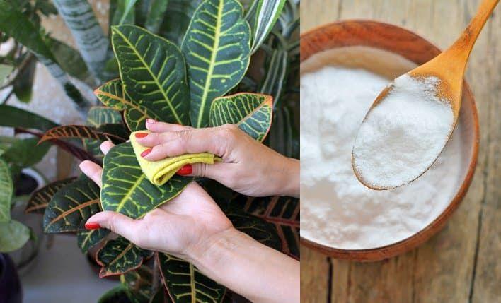Conozca 17 usos del bicarbonato de sodio para mantener su jardín en perfecto estado - e-Consejos