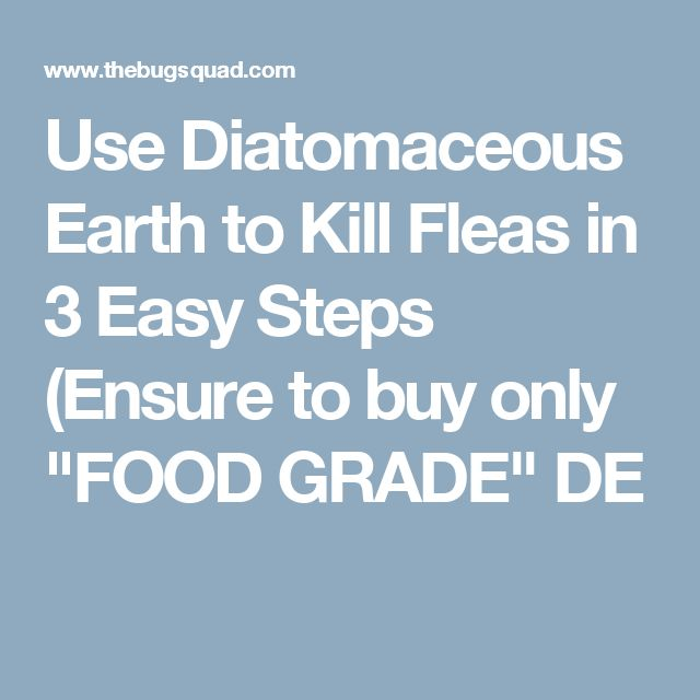 """Use Diatomaceous Earth to Kill Fleas in 3 Easy Steps (Ensure to buy only """"FOOD GRADE"""" DE"""