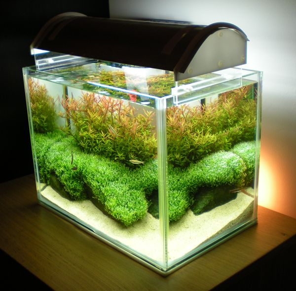 aquascaping ideas | ... Sunrise - 9th place in Nano category AAC | AquaScaping World Forum