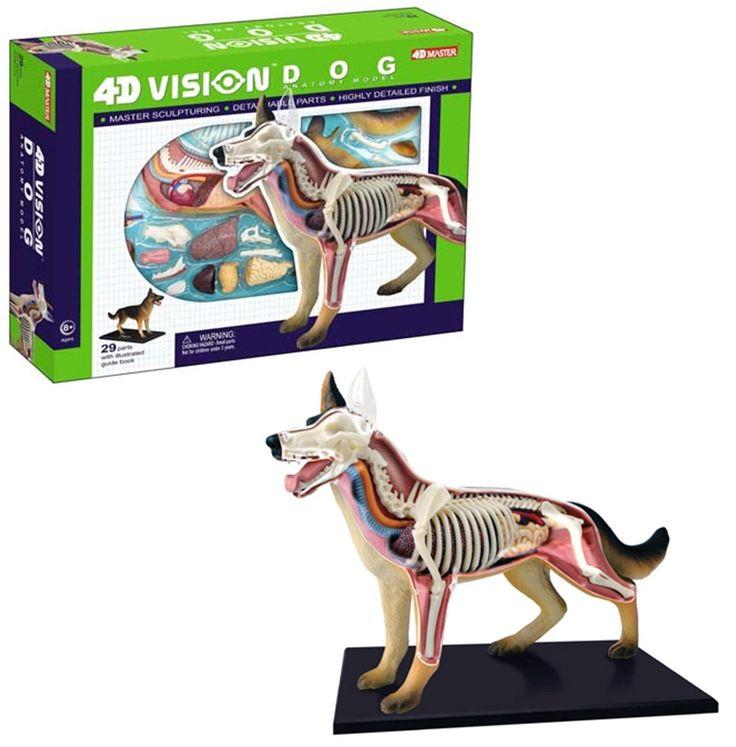 4D Vision Dog Anatomy Model Dog anatomy, Dog medicine