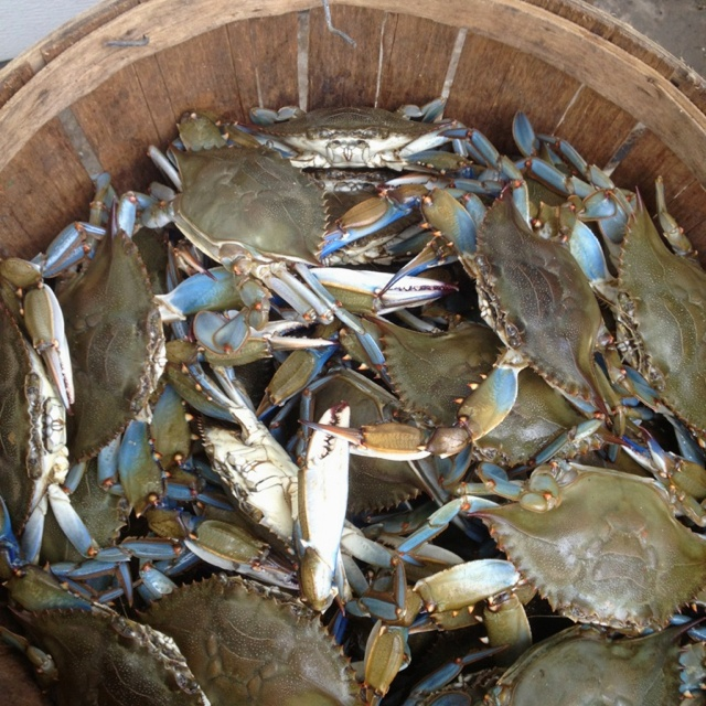 17 best images about crabbing on pinterest virginia for Crab fishing oregon