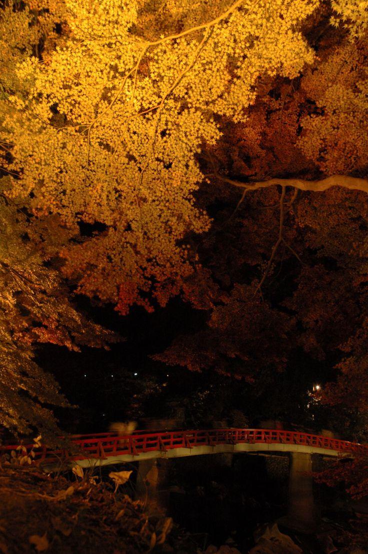 海・山・川 自然とたわむれる愛知県のおすすめドライブスポット
