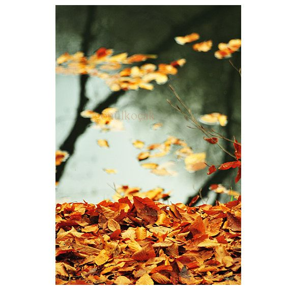 Autumn leaves fall Nature photography Wall Decor lake by gonulk