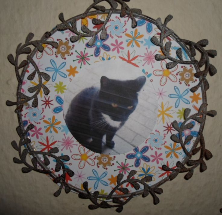 My cat Osiris on a flower background in a frame.