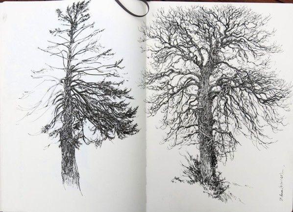 Carnets d'arbres
