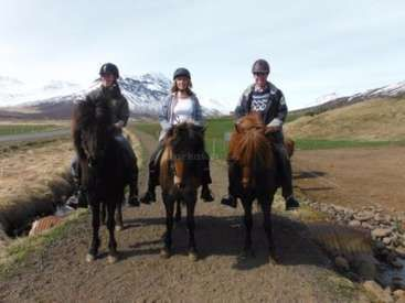 Workaway in Iceland. Unique experience - become an member of an Icelandic family