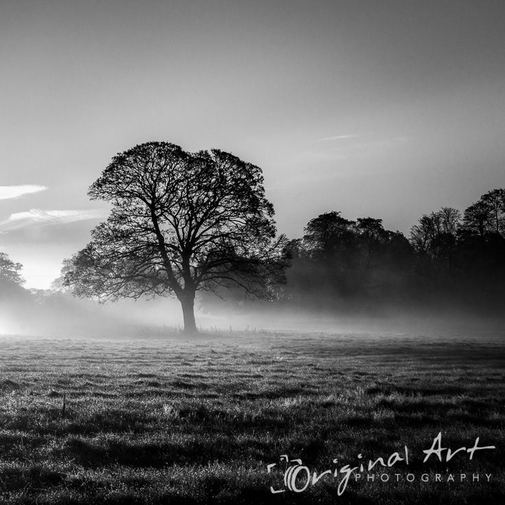This monochrome image was taken just after sunrise at Whitlingham in Norfolk. It won a highly commended award in the Societies' November 2014 Pictorial & Fine Art competition