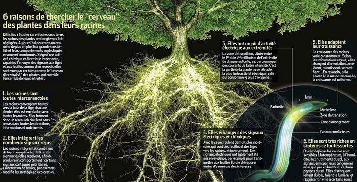Planète GAIA -> Monde Végétal -> Botanique -> L'Intelligence des Plantes <-