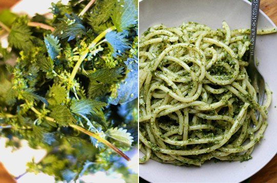 Foraged Stinging Nettle will work almost anywhere as a substitute for basil - here in a pasta sauce. Eight tasty, gourmet nettle recipes, and try nettle also as an alternative in your basil-garlic-butter: http://www.recipebyphoto.com/basil-butter-garlic-bread/