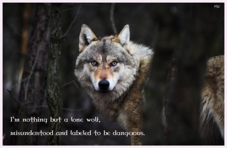 Lone wolf quotes - photo#22