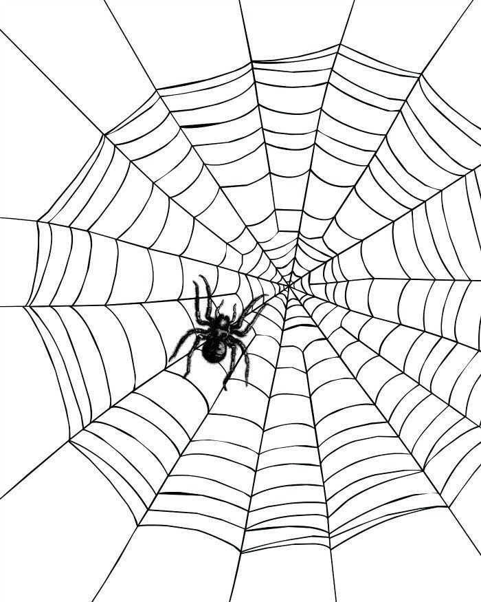 Huge Collection Of Spider Coloring Page In 2020 Spider Coloring