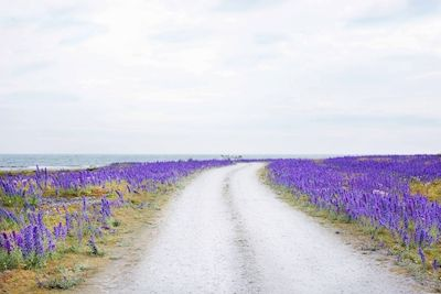Patricia Holmén - Längs med vägen. A photo of a road with purple flowers on both sides.
