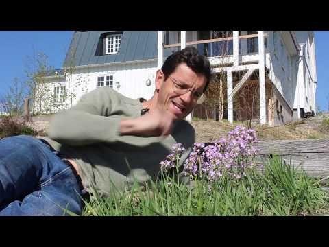 Heimische Bienen Hummel Und Insektenpflanzen Fur April Ein Gartenrundgang Youtube Amazon Affiliate Rayban Wayfarer Interactive