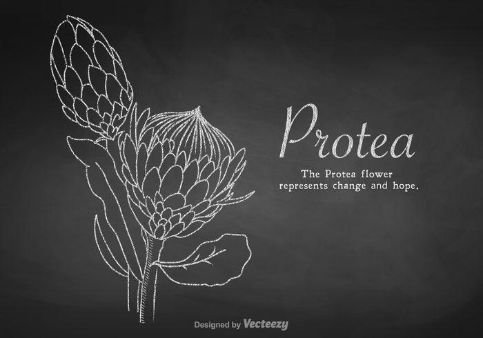 34 Best Protea Flowers Images On Pinterest Stencils
