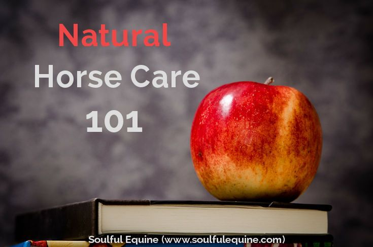 Natural horse care is essential if you want a thriving equine partner.
