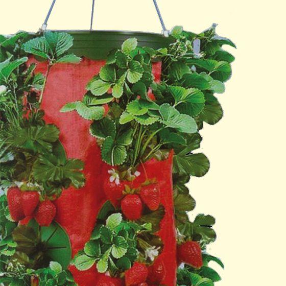 Upside Down Strawberry Planter