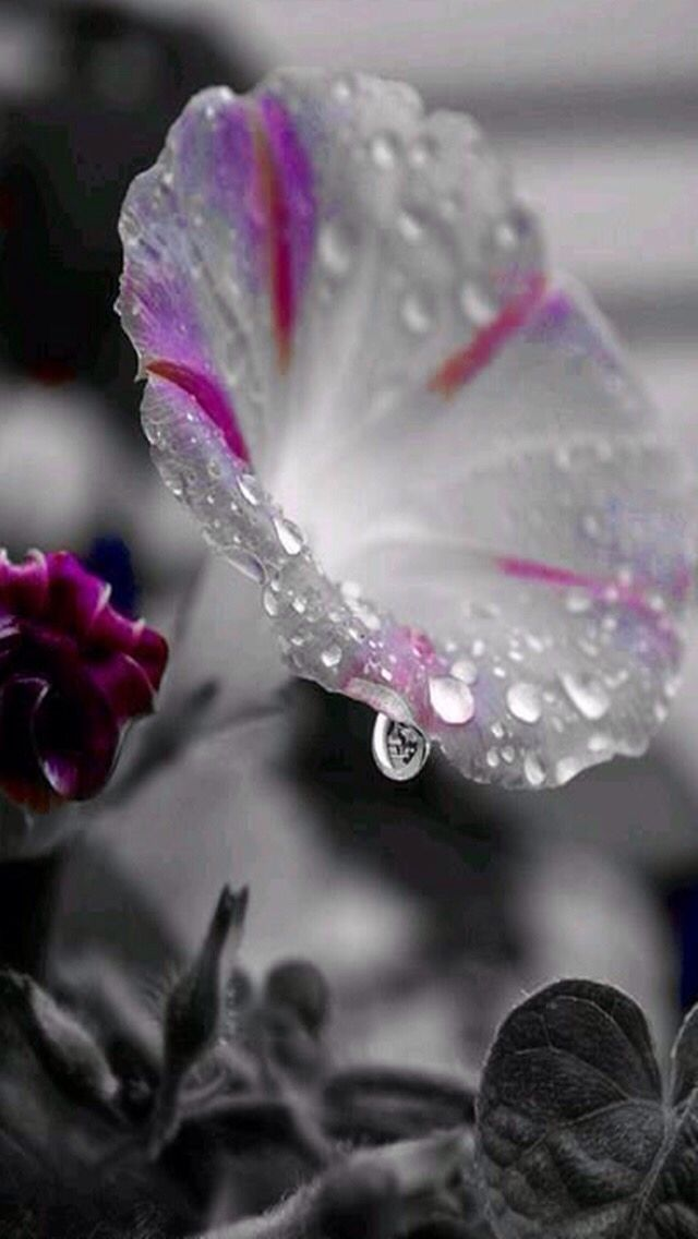 Pretty | water droplets | Pinterest | Flowers, Dew drops and Drop