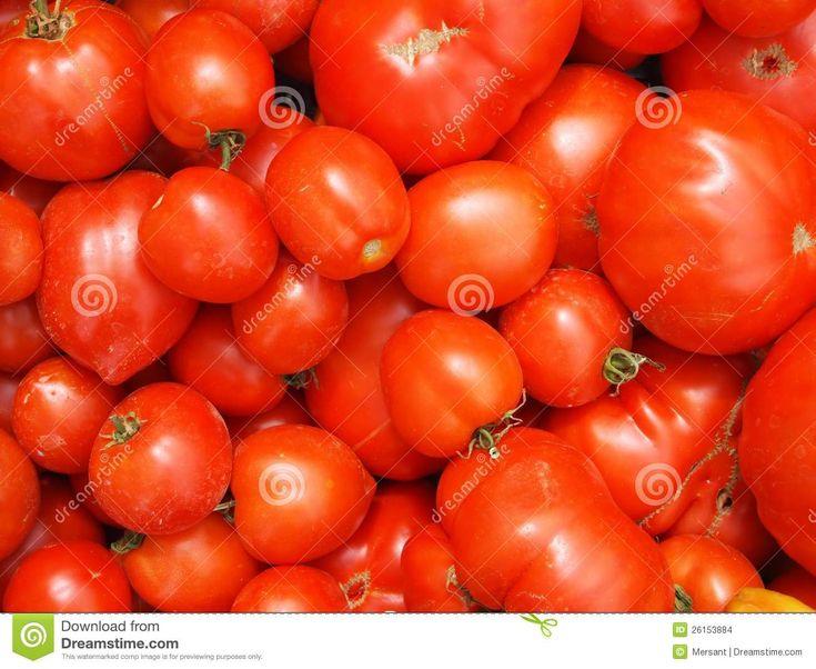 Many fresh tomatoes without background