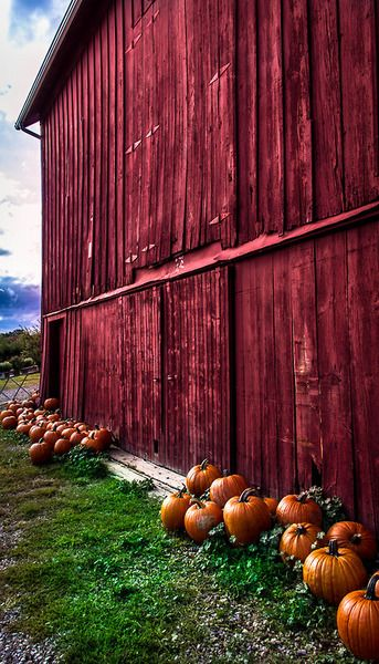 pumpkins against an old red barn