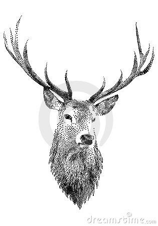 Deer head,  by Wolfgang Kraus, via Dreamstime
