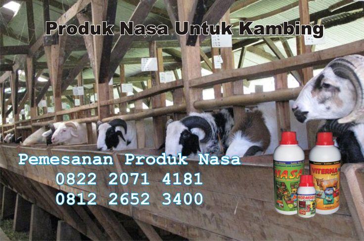 jual-sedia-produk-nasa-untuk-kambing-domba-peternakan-viterna-poc-nasa-hormonik-asli-natural-nusantara-