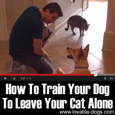 VIDEO: How To Train Your Dog To Leave Your Cat Alone ►► http://lovable-dogs.com/video-how-to-train-your-dog-to-leave-your-cat-alone/?i=p