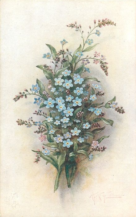 sprays of blue & purple forget-me nots, two stems to bottom - vintage postcard