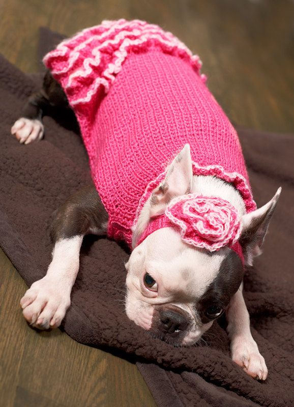 matching headband- ha!Knits Dogs, Fashion Statement, Bright Pink, Sweaters Dresses, Dog Sweaters, Animal House, Pets Fashion, Dogs Sweaters, Boston Terriers