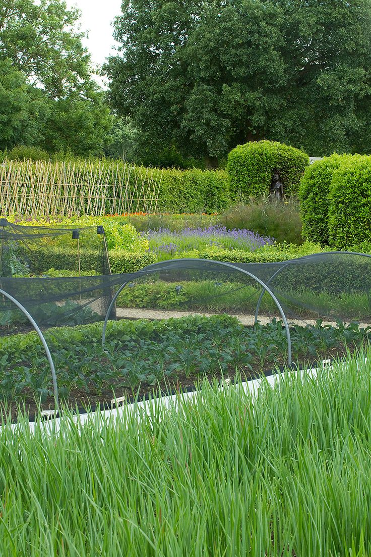 Potager (ornamental vegetable/kitchen garden) - Le Manoir Aux Quat'Saisons, Oxfordshire