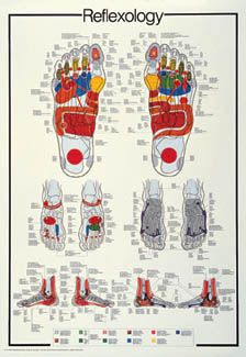 Have pain in your shoulder? Circulatory problems? Indigestion? The answer is in the foot! This is the official Reflexology wall chart, featuring the human foot from three angles, and precise reflex points for every part of the body. With legends printed in five languages (English, French, Spanish, Italian and German), this precisely-detailed reference chart is an absolute must for your wall.
