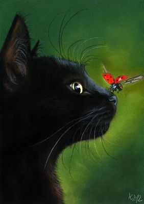 Stunning #black #cat with #ladybug landing on her nose.  Bzzzz