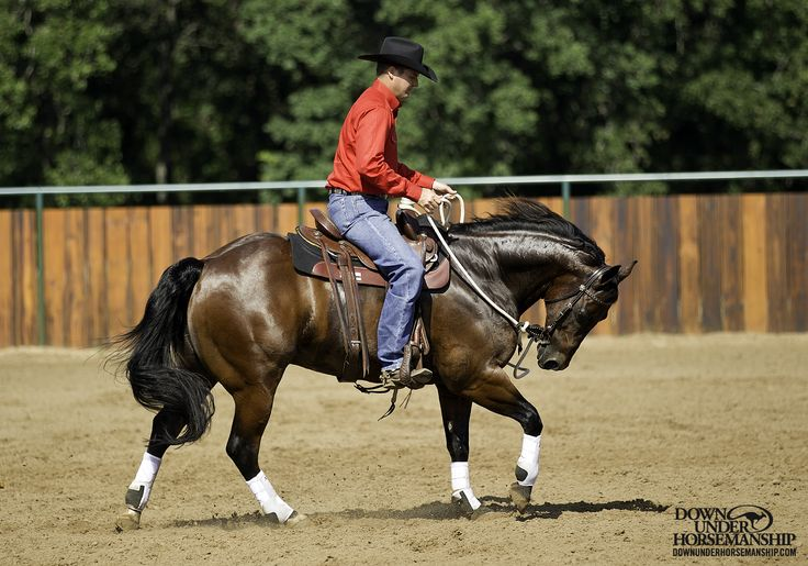 Riding Exercise #4: Vertical Flexion at the Canter  Goal: Whenever you lightly pick up on the reins and add leg pressure at the same time, the horse should immediately soften to the bit, tuck his nose in, round his back and create slack in the reins.  Learn more https://www.downunderhorsemanship.com/Store/Product/MEDIA/D/254/