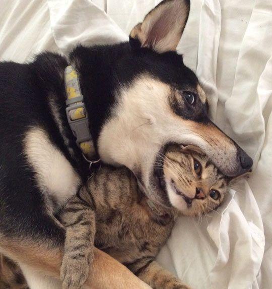 "* * CAT: "" It's a dog-eat-dog world, numb skull ! """