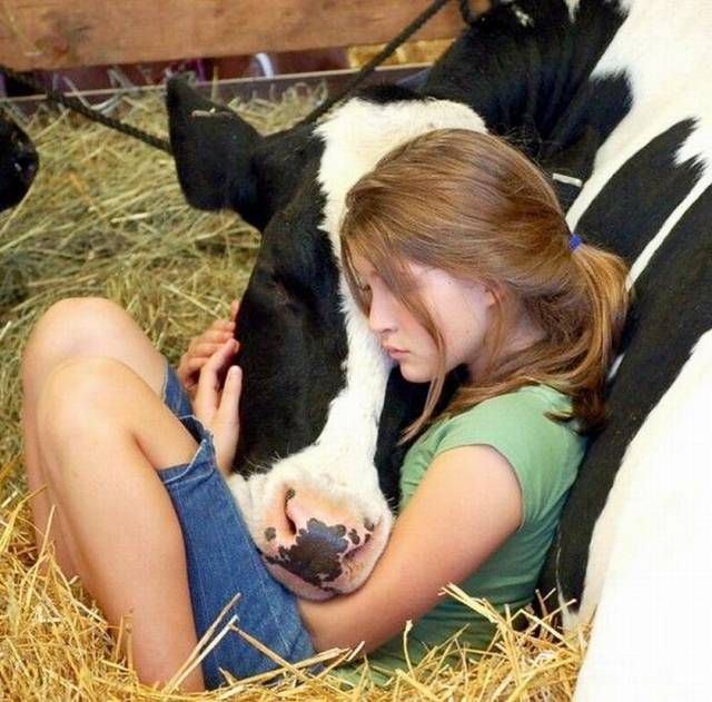 *A girl can have a cow as her best friend <3: Little Girls, Friends, Sweet, Girls Generation, Farms, Pet, Kids, Cows, Animal