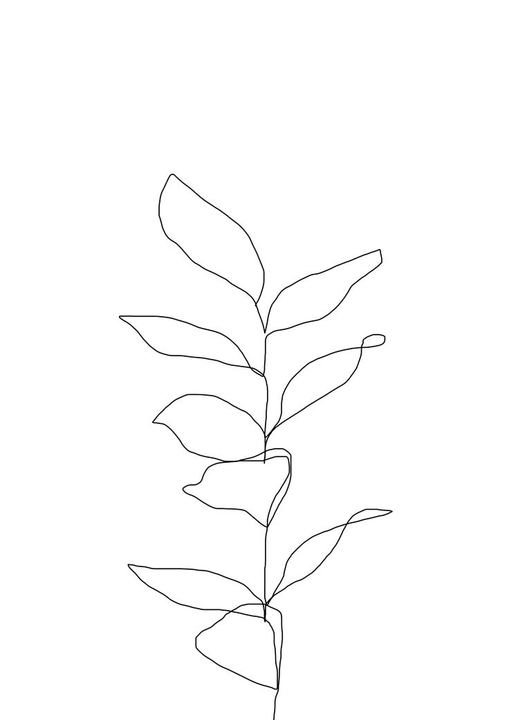 Single Line Drawing Flowers : One line continuous drawing from plant minimal