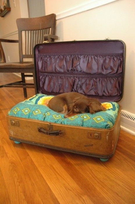 A suitcase repurposed as a dog bed! Genius!