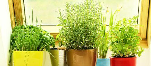 Όταν ζούμε σε διαμέρισμα στην πόλη, δεν έχουμε αυλή για να ασχοληθούμε με την κηπουρική, μπορούμε όμ...