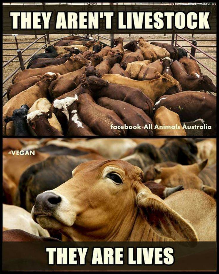 3795 best **Vegan** images on Pinterest | Animal rights ...