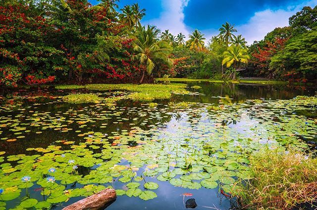 LAVISHLY LUSH  .  Happy FriYAY InstaFam! It may have been a dreary day on Papuluko Black Sand Beach when we visited but the sun shone through long enough to enjoy this tropical oasis  Check out Day 8 of our highlighted stories to see what it looked like moments before this was taken  !  Were looking forward to spending the weekend with friends and celebrating St. Patricks Day  .   What do you have planned this weekend?  . .  #vacationcouple #lethawaiihappen #blacksand @gohawaiica…